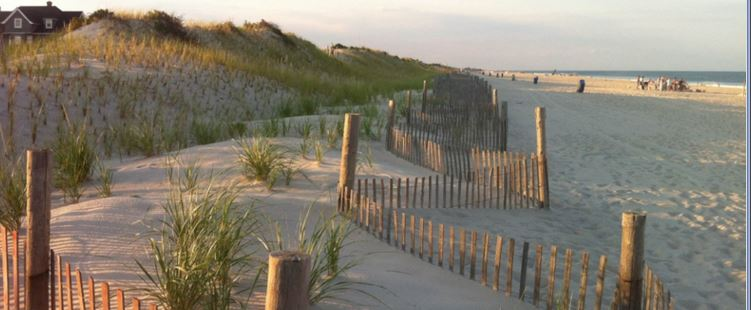 Bradley Beach Dune Grass Planting a Success!