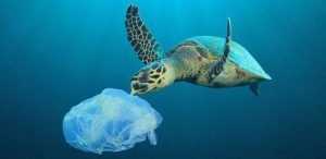 BAN PLASTIC BAGS & INTENTIONAL BALLOON RELEASE!